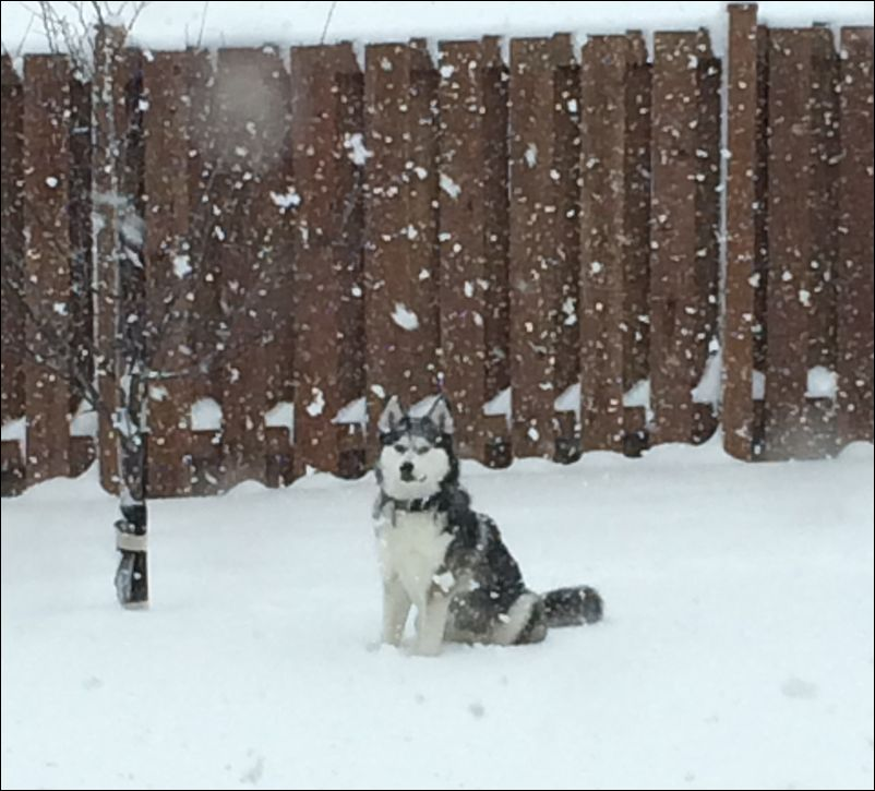 Kira2015March Snow